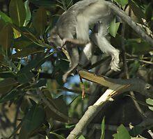 Flying Monkey by Aussiebluey