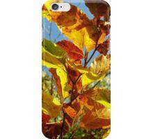 Autumn Colours, Wiltshire iPhone Case/Skin