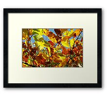Autumn Colours, Wiltshire Framed Print