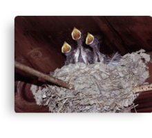 """92347-1  SCHUBERT'S """"AVE MARIA"""" BEING SUNG BY THE THREE TWEETERS Canvas Print"""