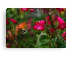 Penstemon and Bee in Flight - Fractalius Canvas Print