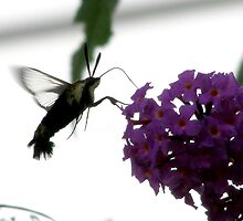 Bird or Bug??  by Melzo318