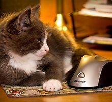 Cat & Mouse Pad by Scott Denny