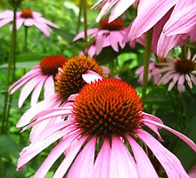 pink beauties by Tonee Christo
