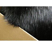Cat Fur Photographic Print