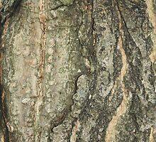 Tree by Photocelest