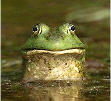 Bull Frog  Photographic Print