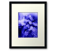 Arctic #1 Framed Print