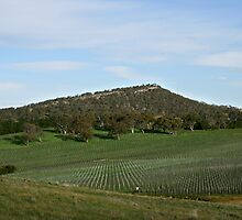 Summit & Vines - Nairne by LeeoPhotography