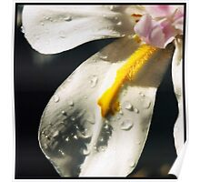 Droplets... Poster