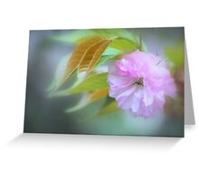 Pink Blossom #2 Greeting Card