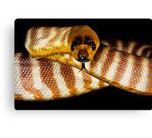 Woma Python [Aspidites ramsayi] Canvas Print