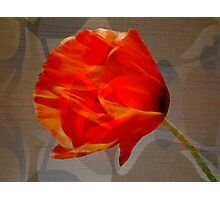 And They Called It Poppy Love Photographic Print