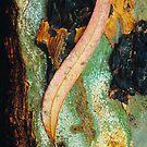 'River Red Gum' leaf and bark. by Ern Mainka