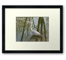 Waterbird in Austria Framed Print