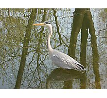 Waterbird in Austria Photographic Print