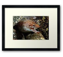 Smiling Assassin Framed Print