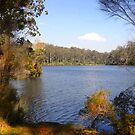 The lake in the forest by georgieboy98