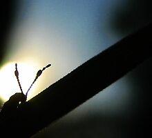 Sundown by LillyCherie