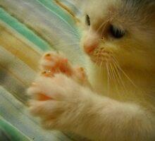 Itty Bitty Kitten Found Her Feets 1 by katreneekittel