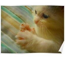 Itty Bitty Kitten Found Her Feets 1 Poster