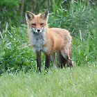 Mother Fox by Cj Virgie