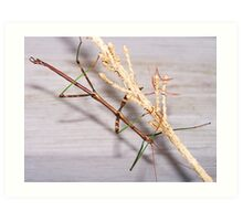 Walking Stick Insect Art Print