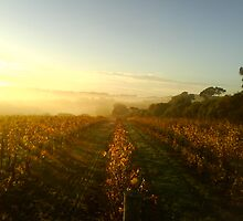 Vineyard at Sunrise by David Lang