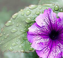Purple Flower by littlefrog7