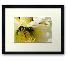 Large White Single Cactus Flower Framed Print