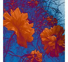 Cheery poppies Photographic Print