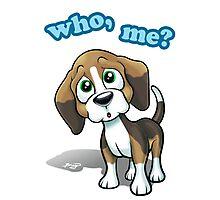 Beagle - Who, Me? Photographic Print