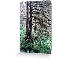 Another view of the Rainforest - Tall trees Greeting Card