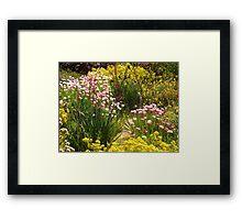 Australian wildflowers, Kings Park, Perth, Western Australia. Framed Print