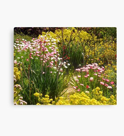 Australian wildflowers, Kings Park, Perth, Western Australia. Canvas Print