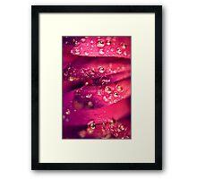 Cerise Framed Print