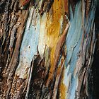 River Red Gum bark. by Ern Mainka