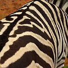 Zebra pattern. by Andrew Ferguson