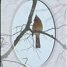 Beautiful Female Cardinal on a Winter Day by toots