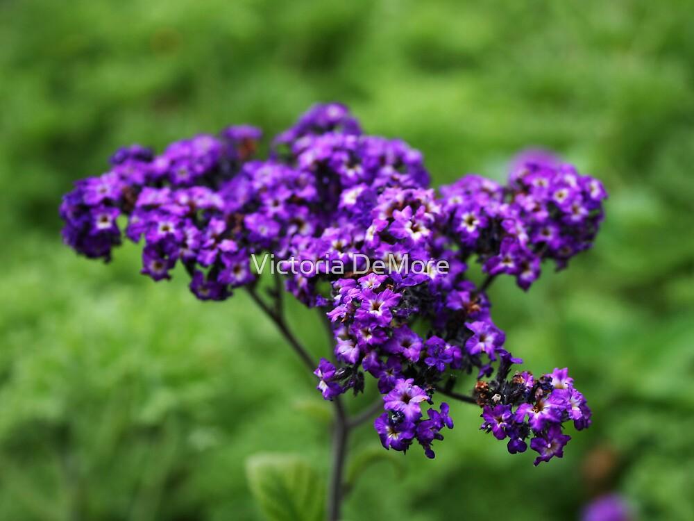 Purple Passion by Victoria DeMore