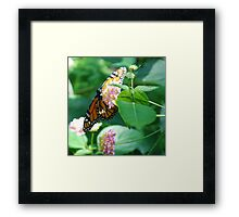 On Golden Wing... Framed Print