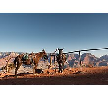 All in a Day's Work – Grand Canyon National Park, Arizona Photographic Print