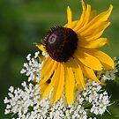White Lace & Yellow by Curtiss Simpson