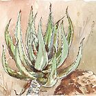 Young Aloe ferox by Maree  Clarkson
