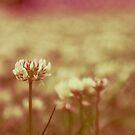 rosalide by Aimelle