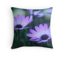 daisy dawn (osteospermum) Throw Pillow
