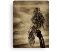 Gently Bowed Palm Canvas Print