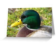 Portrait of a duck... Greeting Card