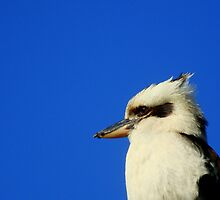 Kookaburra by Of Land & Ocean - Samantha Goode