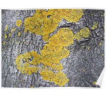 Tree Trunk Lichens Poster